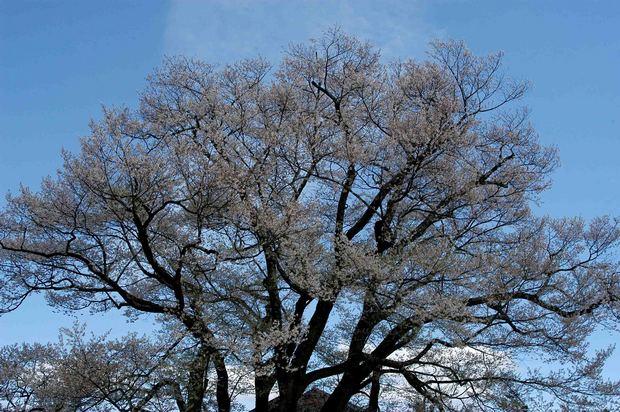 2015年飯田桜撮影ドライブ_15.jpg