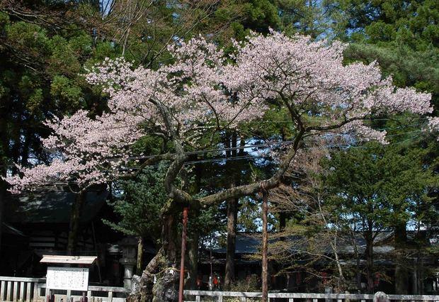 2015年飯田桜撮影ドライブ_17.jpg