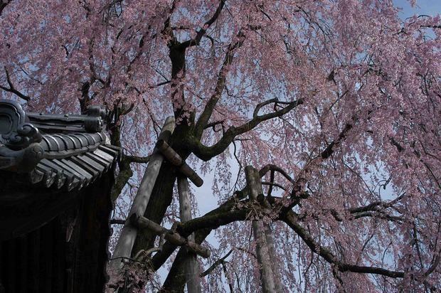 2015年飯田桜撮影ドライブ_4.jpg