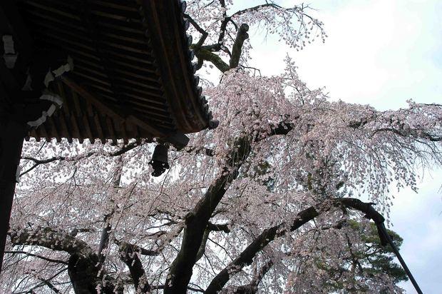 2015年飯田桜撮影ドライブ_5.jpg