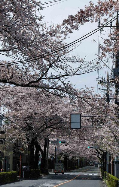 2016年_近所の春の花(2)_1.jpg