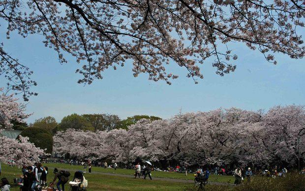 2016年_近所の春の花(2)_6.jpg