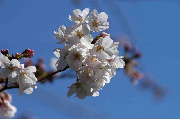 2016_近所の春の花_1.jpg