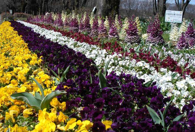 2016_近所の春の花_11.jpg