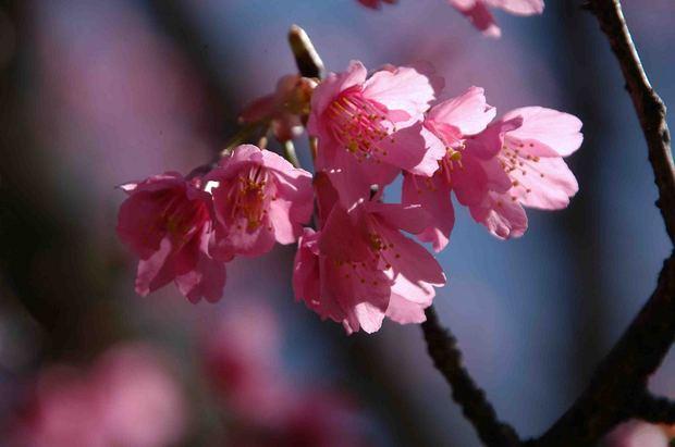 2016_近所の春の花_15.jpg