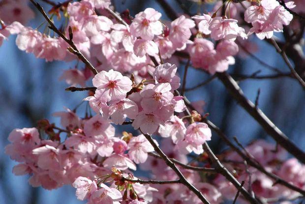2016_近所の春の花_17.jpg