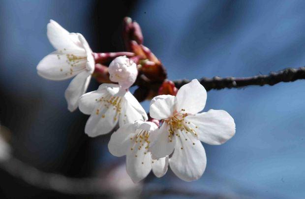 2016_近所の春の花_18.jpg