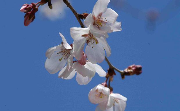 2016_近所の春の花_19.jpg