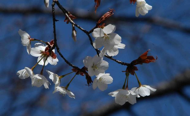 2016_近所の春の花_2.jpg