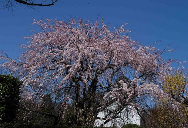 2016_近所の春の花_21.jpg
