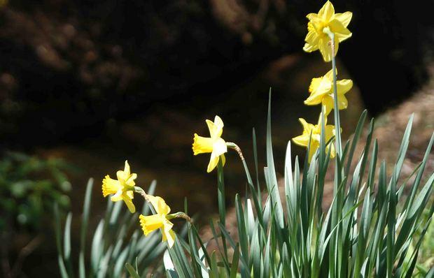 2016_近所の春の花_4.jpg