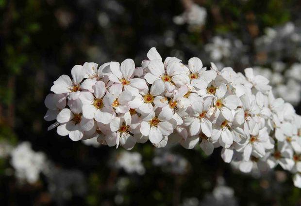 2016_近所の春の花_5.jpg