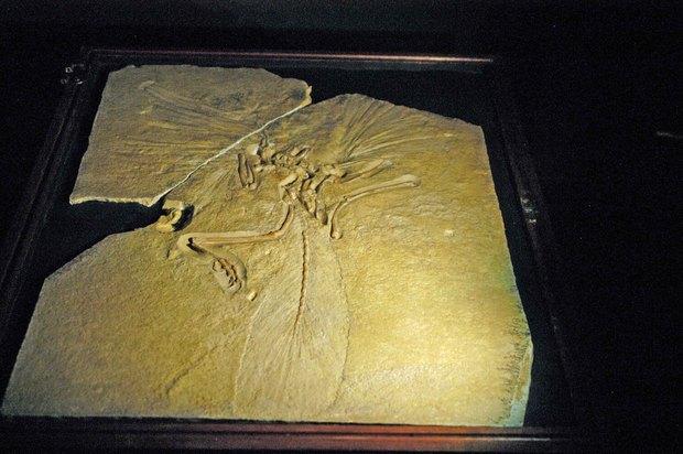 大英自然史博物館展_4.jpg
