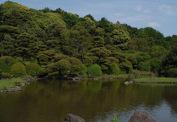 小石川植物園の花_11.jpg