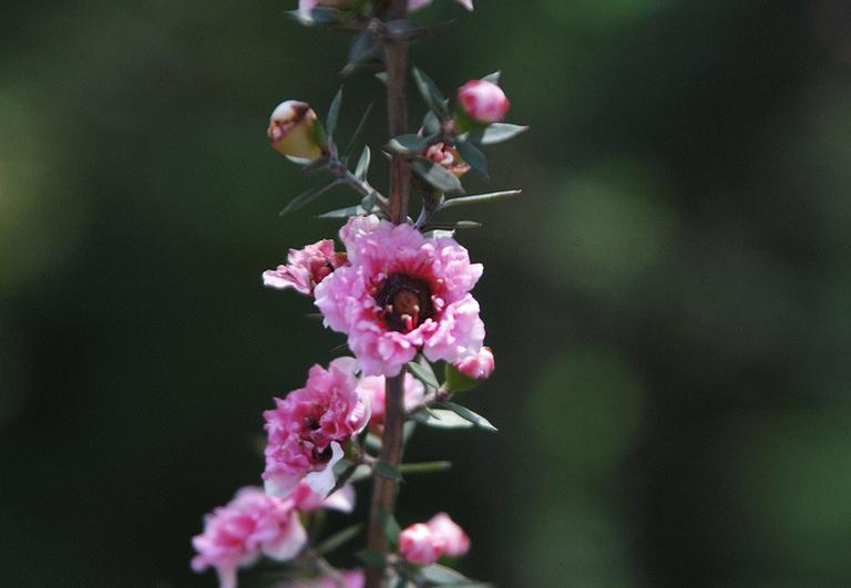 小石川植物園の花_4.jpg