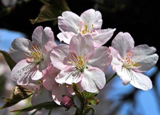 小金井公園の春の花たち(2)_12.jpg