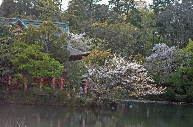 小金井公園の春の花たち(2)_13.jpg