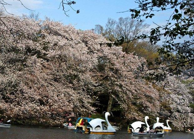小金井公園の春の花たち(2)_14.jpg