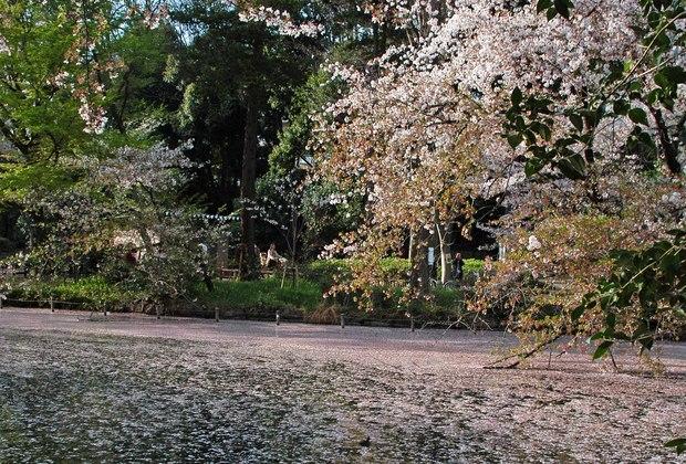 小金井公園の春の花たち(2)_15.jpg