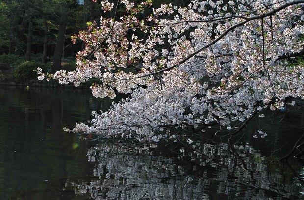 小金井公園の春の花たち(2)_17.jpg