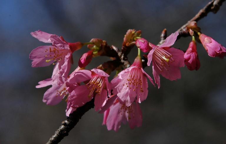 小金井公園春の花_10.jpg