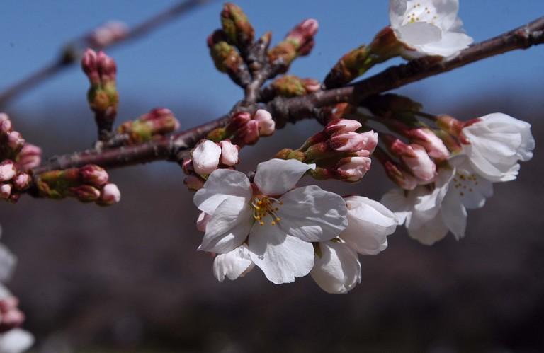 小金井公園春の花_12.jpg