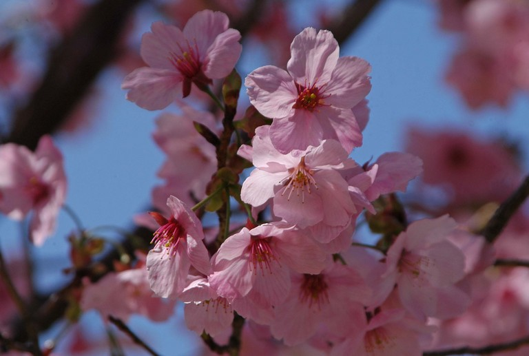 小金井公園春の花_13.jpg