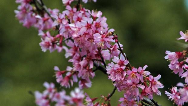 新宿御苑の早春の花_1.jpg