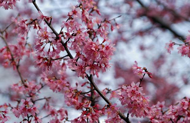 新宿御苑の早春の花_2.jpg