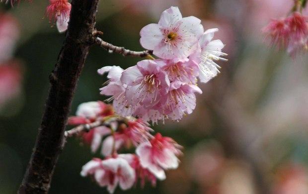 新宿御苑の早春の花_4.jpg