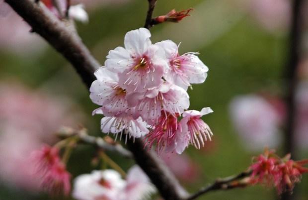 新宿御苑の早春の花_5.jpg