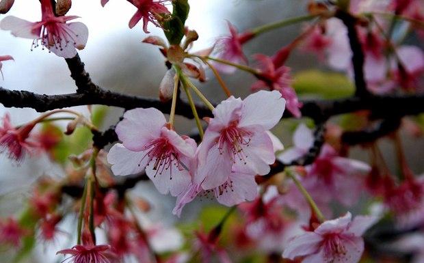 新宿御苑の早春の花_6.jpg