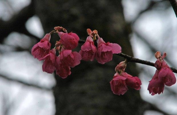 新宿御苑の早春の花_9.jpg