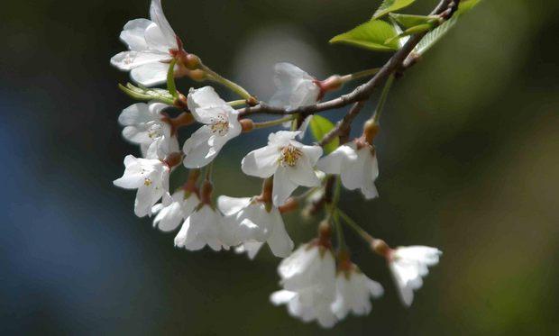 春爛漫_14.jpg