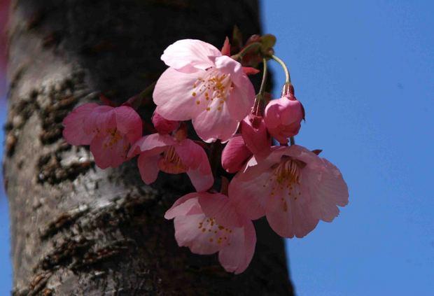 春爛漫_15.jpg