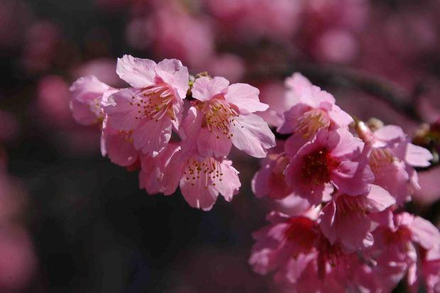 春爛漫_16.jpg
