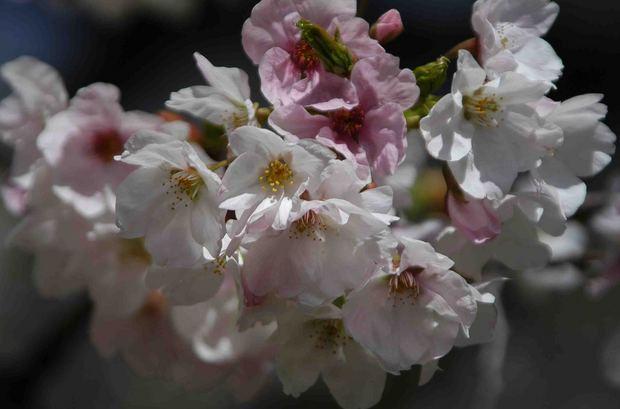 春爛漫_18.jpg
