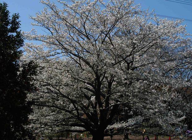 春爛漫_19.jpg