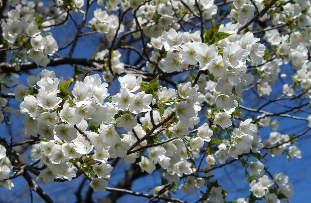 春爛漫_2.jpg