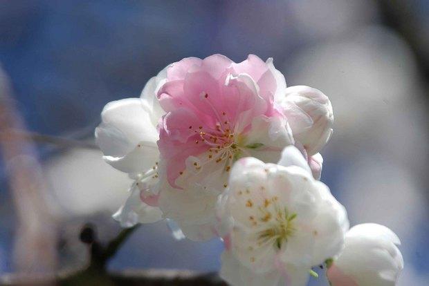 春爛漫_3.jpg