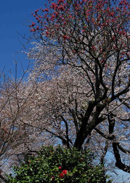 春爛漫_5.jpg