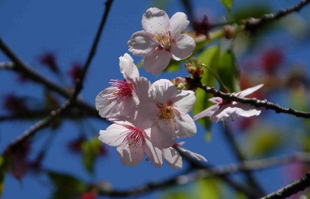 春爛漫_9.jpg