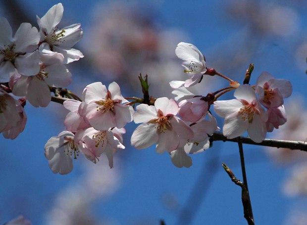 近所の春の花たち2017_14.jpg