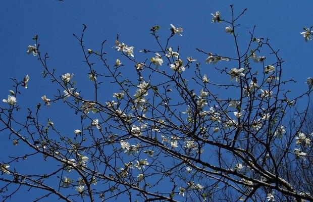 近所の春の花たち2017_5.jpg